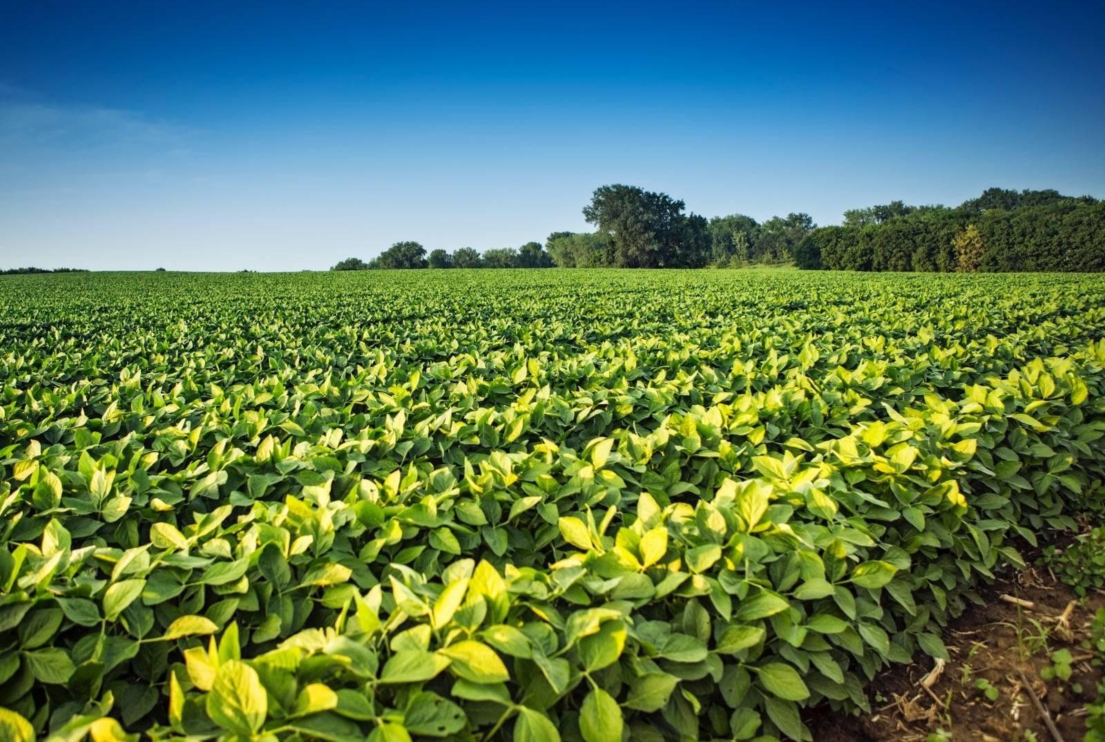 Global Rajasthan Agritech Meet (GRAM) 2016