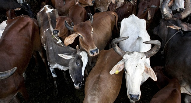 ban on beef export in india