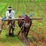 Here's how CM Vasundhara Raje is developing a new agricultural Rajasthan!