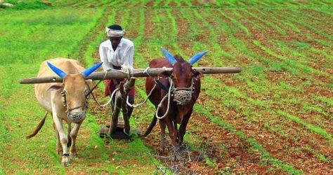 GRAM farmer agricultural