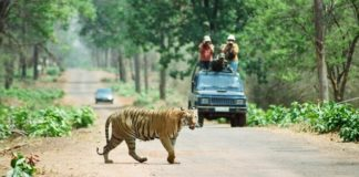 Tadoba National Park - Wild