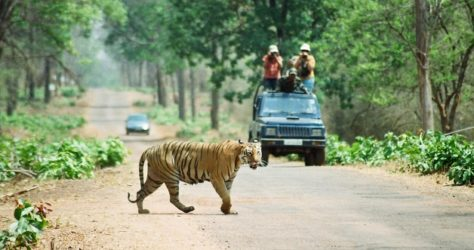Tadoba National Park - Wild