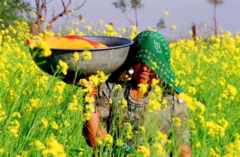 floriculture in rajasthan