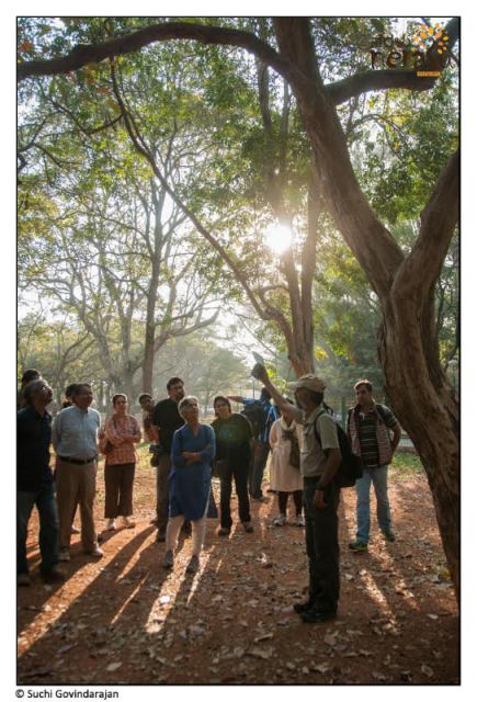 Nature Walks: Participants are taken to green areas where nature experts inform them about individual tree properties.