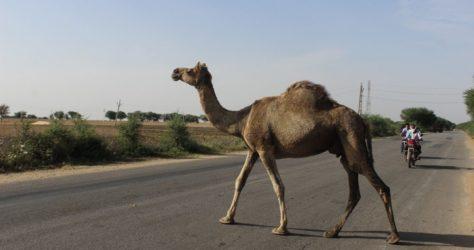 Rajasthan highway