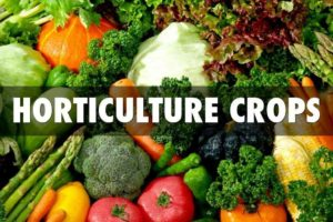 Kota GRAM 2017 will Explore Investment Opportunities in Horticulture to Boost Agriculture Economy