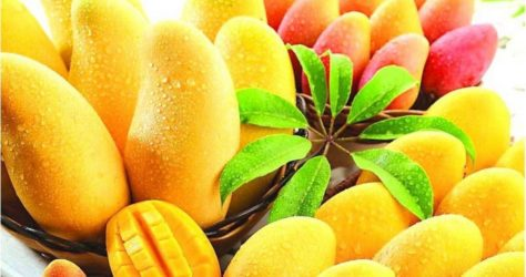 From Kota to Rashtrapti Bhawan, Rajasthan's Sadabahar Mango is All the Rage!