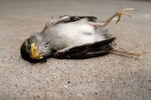 Jatinga: Where birds commit suicide.