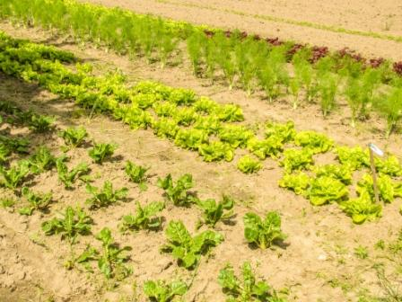 Rajasthan government to allot fields for organic farming in state.