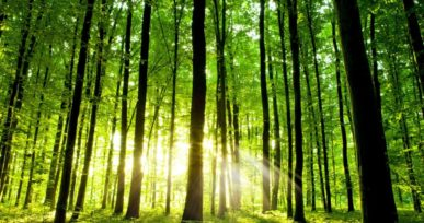 International Forests Day