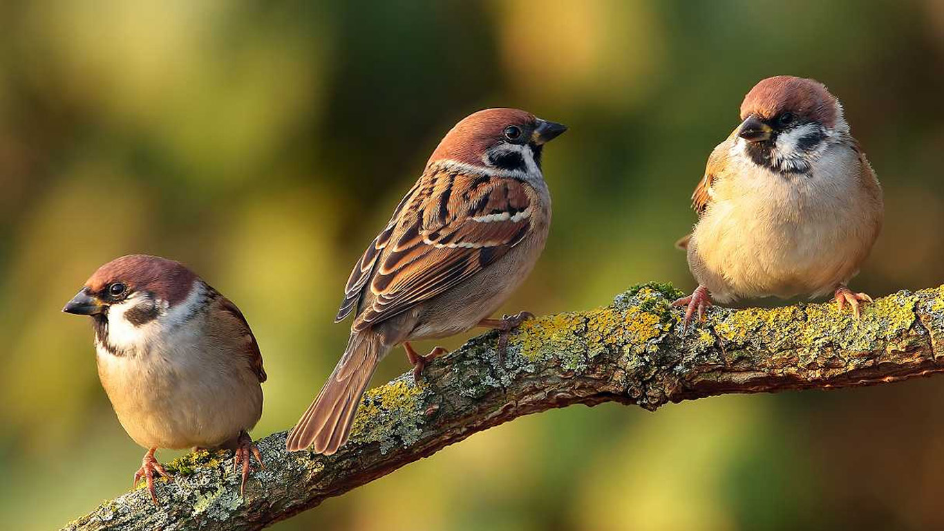 World sparrow day a day to spread awareness about house - Hd pics of nature with birds ...
